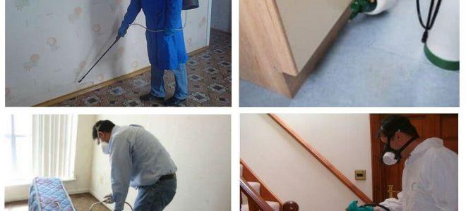 Disinsectie van vlooien in het appartement door professionele diensten