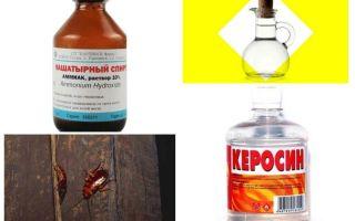 De meest effectieve folk remedies voor kakkerlakken