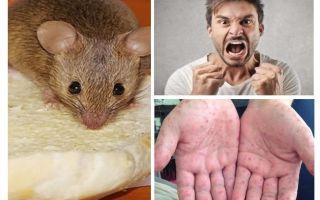 Wat kan besmet zijn van muizen