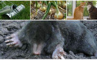 Middel van moedervlekken op hun zomerhuisje en tuin