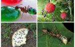 Welke mieren eten in de natuur