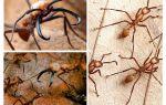 De gevaarlijkste mieren ter wereld