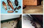 Waar verstoppen zich kakkerlakken in het appartement