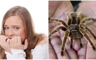 Wat is de naam van de angst voor spinnen (fobie) en behandelmethoden