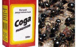 Frisdrank tegen mieren in de tuin