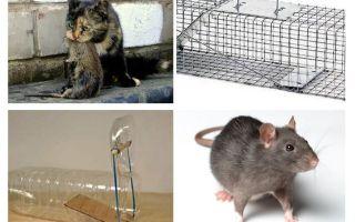 Hoe te om ratten uit een privé huis te krijgen