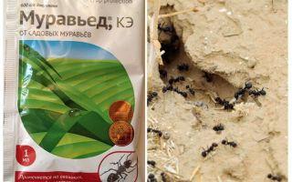 Ant remedie Anteater instructie en beoordelingen