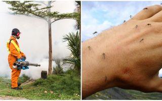 Middelen voor het verwerken van het gebied tegen muggen en teken