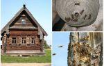 Hoe de bijen uit het houten huis en andere plaatsen te krijgen