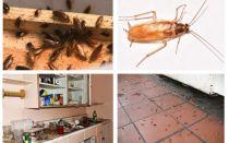 Voor eens en altijd van kakkerlakken in het appartement af
