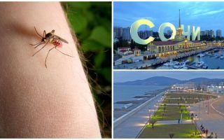 Zijn er muggen in Sochi en Adler
