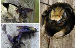 Hoe houten bijen uit een houten huis te verwijderen