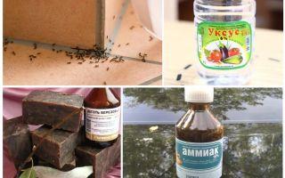 Mieren bestrijden in een huis of appartement