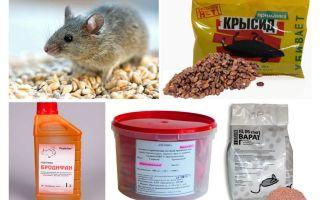 Het beste middel voor muizen