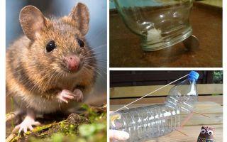 Hoe een muis vangen in een huis zonder een muizenval