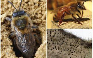 Hoe de aarde bijen van de site te verwijderen