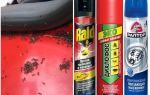 Hoe mieren uit de auto te krijgen