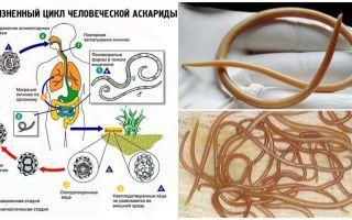 Symptomen en behandeling van ascariasis bij volwassenen