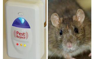 Pest Redzhekt ultrasone repeller knaagdieren en insecten