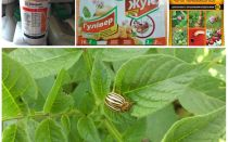 De meest effectieve vergiften en vergiften van de coloradokever