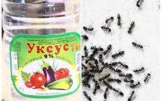 Azijn tegen mieren in de tuin