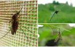 Hoe hoog muggen en vliegen vliegen