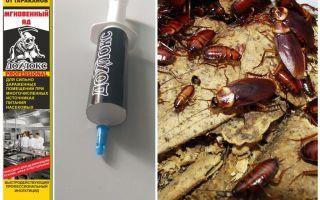 Betekent Dohloks tegen kakkerlakken