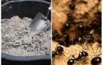 Ash van de mieren op de site