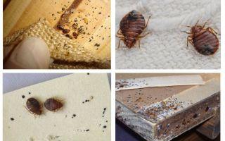 Hoe ziet een meubelbug eruit en hoe kom je er vanaf