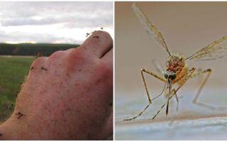 In welke landen en steden zijn er geen muggen