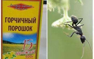 Mosterdpoeder van mieren en bladluizen in de tuin