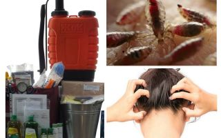 Wat is een anti-pediculosis-kit?