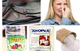 Hoe zich te ontdoen van de geur van muizen