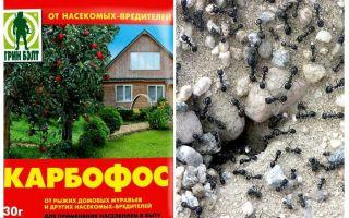 Mieren anthis in de tuin