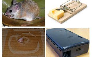 Hoe muizen uit een privé-huis te verwijderen