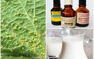 Melk met jodium van bladluizen