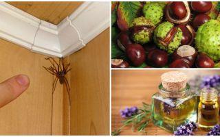 Methoden en hulpmiddelen voor spinnen in een appartement of privé-huis