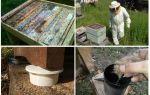 Hoe zich te ontdoen van mieren in de bijenteelt folk remedies