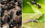 Soorten mieren in Rusland en de wereld