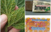 Teer en huishoudelijke zeep van bladluizen op planten