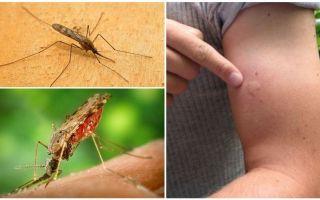 Wat te doen als je de anofelessen-mug hebt gebeten