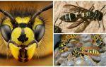 Kunnen wespen zien, slapen of vliegen 's nachts