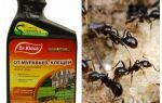 Dr. Klaus van mieren en teken