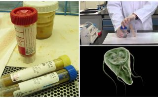 Hoe feces op de juiste manier door te voeren op Giardia, analysemethoden