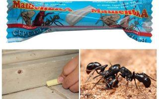 Potlood Masha van mieren