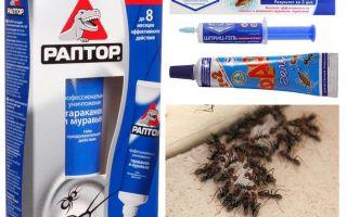 De beste ant-producten