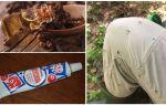 Folk remedies voor muggen