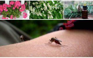 Hoe om te gaan met muggen in een appartement of huis