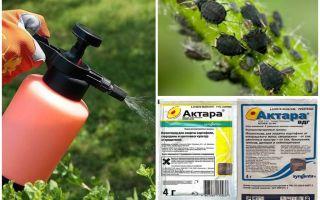 Betekent Aktara tegen bladluizen