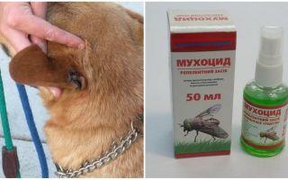 Hoe en wat om de oren van een hond te behandelen tegen vliegen